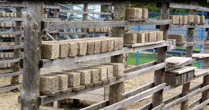 Bimsziegel lagern zum Arken auf einem Trockengestell. Foto: Angelika Albrecht